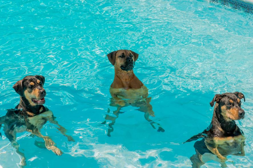 dogs got into the pool
